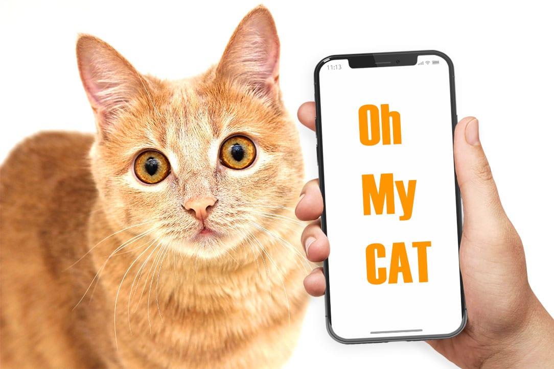 Cat filter face OMG