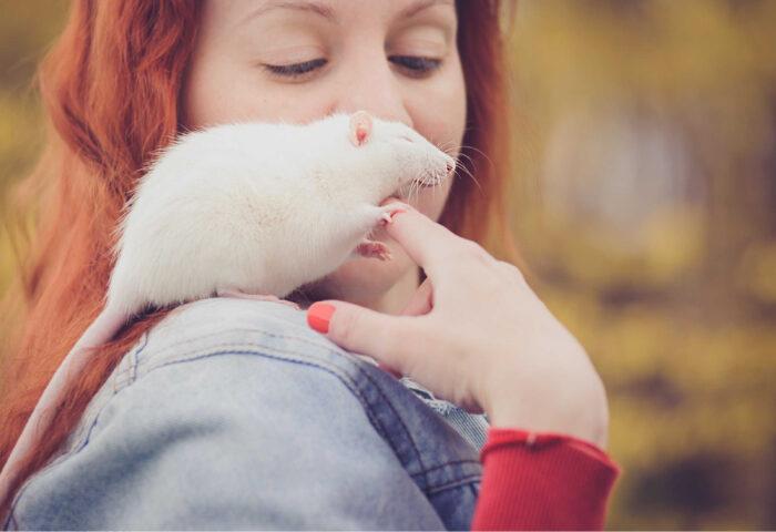 Qué es la carrera de la rata